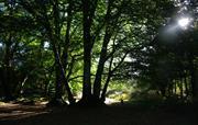 Walk in the woods near Newbridge