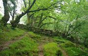 Mossy wall near Newbridge