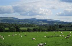 View from farm of Black mountains