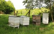 Bee Hives at Coopers Farm