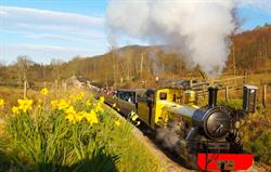 Narrow gauge railway - 5 mins away