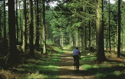 Cycling in the Eskdale woods
