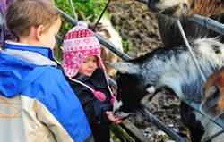 Children love the daily animal feed
