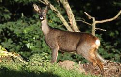 Our friendly Deer!
