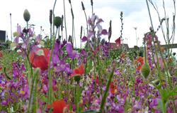 Our Wild Flower Meadow