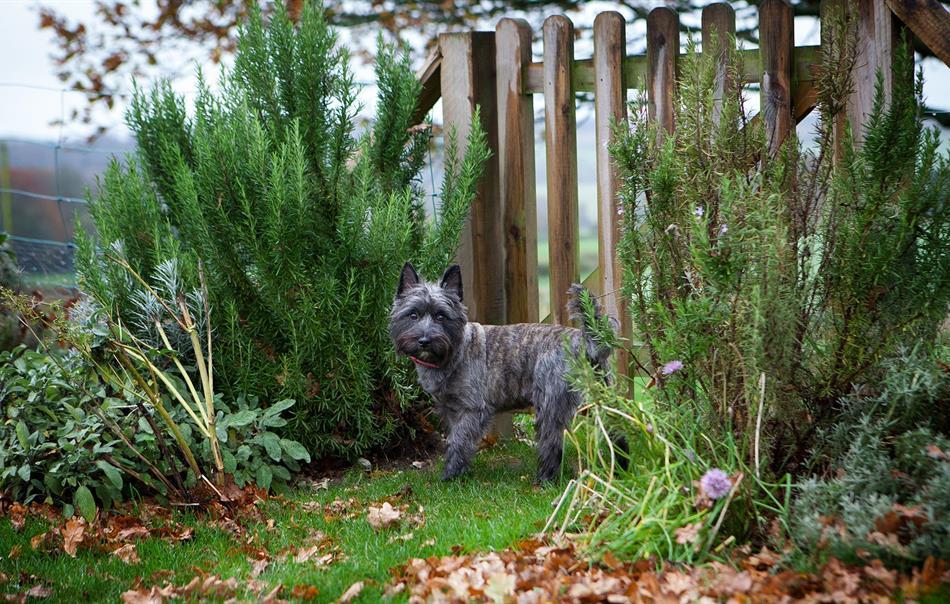 Hedgehunter - dog in enclosed garden