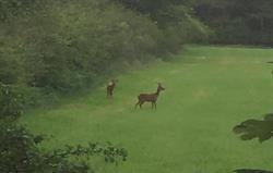 Lots of visiting wildlife