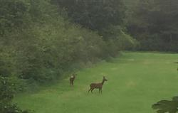 Visiting Wildlife