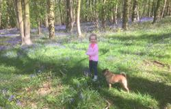 Exploring the bluebell woods