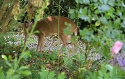 Wildlife at Bruern