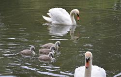 Signets at Bruern