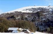 Snowy Swainsley