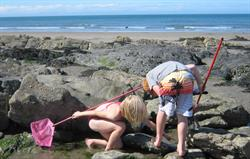 Rockpooling fun at Poppit Sands