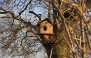 Barn Owl box in Oak tree