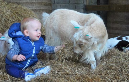 Meet our friendly pygmy goats