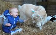 Meet our friendly pygmy goats