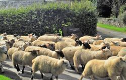 West Woolley Farm rush hour