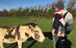 Tom the donkey