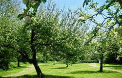 Springtime in our Orchard