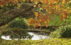Our pond in autumn