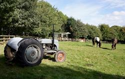 Horses and an old Fergie tractor