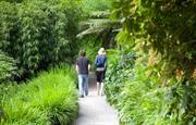 Trebah - c/o Trebah Gardens