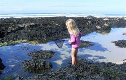 Rockpooling fun for the children