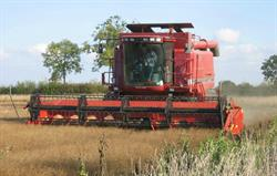 Combine cutting winter linseed