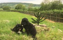 Home Farm fields & Harry and Archie