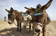 Brid Donkeys