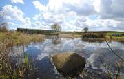 Field House wildlife pond