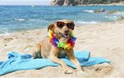 Some dog friendly beaches