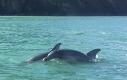 Local Dophin Spotting