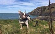 Dog On Coastal Path