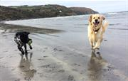 Freedom on Poppit Sands Beach
