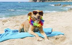 Some Beaches Allow Dogs All Year Ro