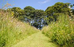 High Barn meadow behind Granary