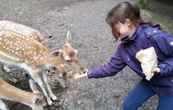 Feeding deer at Tamar Otter Sanctua