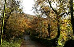 Autumn colours at Fenteroon Bridge