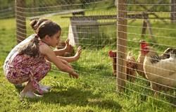 Children and animals at Gladwins Fa