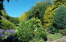 Cotage back garden in summer bloom