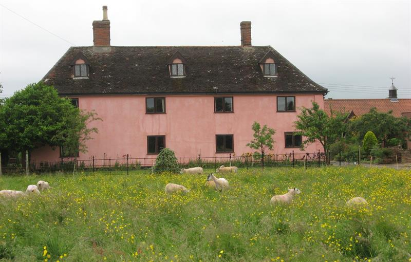 Ivy House Front with sheep