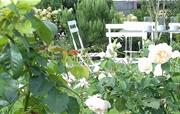 Enjoy the landscaped garden