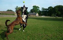 Dogs having fun at Park Farm