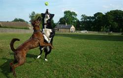 Dogs having fun at Park Farm