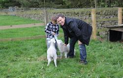 lamb feeding in spring