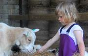 Feeding our friendly goats is fun for all ages