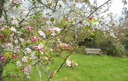 Enjoy our lovely orchard