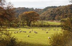 Countryside around Rivercatcher