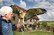 Falconry Experiences with Mark